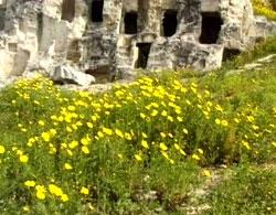 Tuvixeddu, one of the biggest necropolis in the Mediterranean Sea