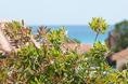 Costa Rei - Home le Ginestre